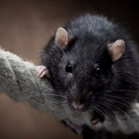 10 Easy Tips to Prevent Mice and Rodents Inside the Home