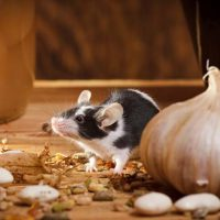 Eight Fascinating Facts You Never Knew About Mice